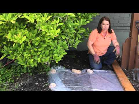 How to Sterilize Soil in the Garden : Grow Guru