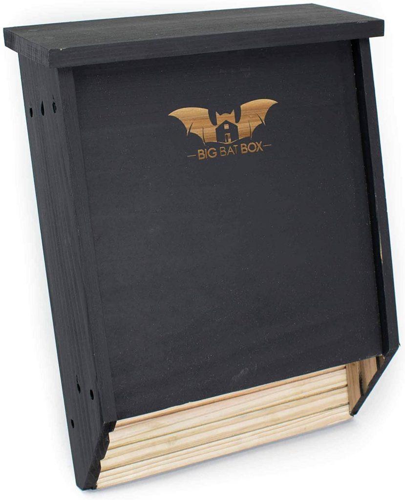 Big Bat Box