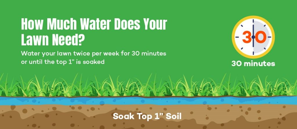 How Much Water Does Your Lawn Need