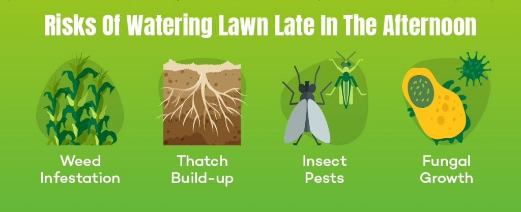 Risk of watering lawn in the afternoon