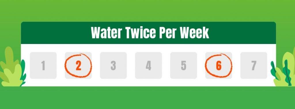 Water your lawn twice per week