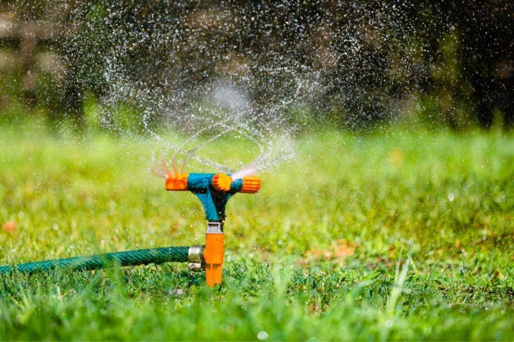 Best Time To Water Grass