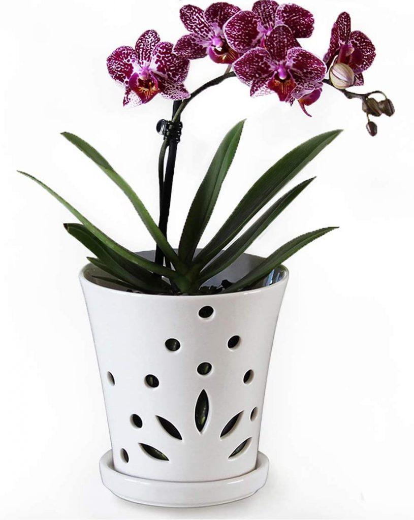 Atri Ceramic Orchid Pot