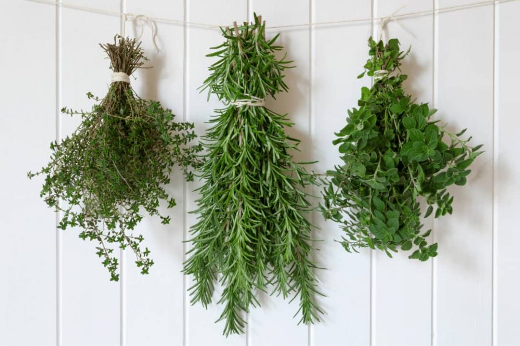 Hanging Rosemary