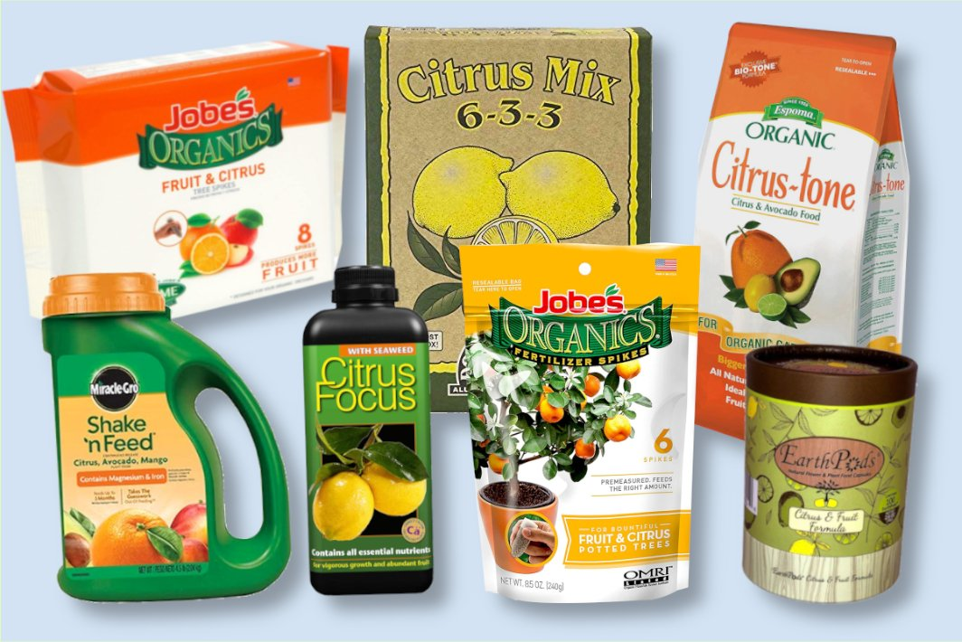 10 Best Citrus Tree Fertilizers Reviewed How To Use Them