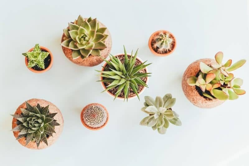 Best Succulent Pots And Succulent Planters
