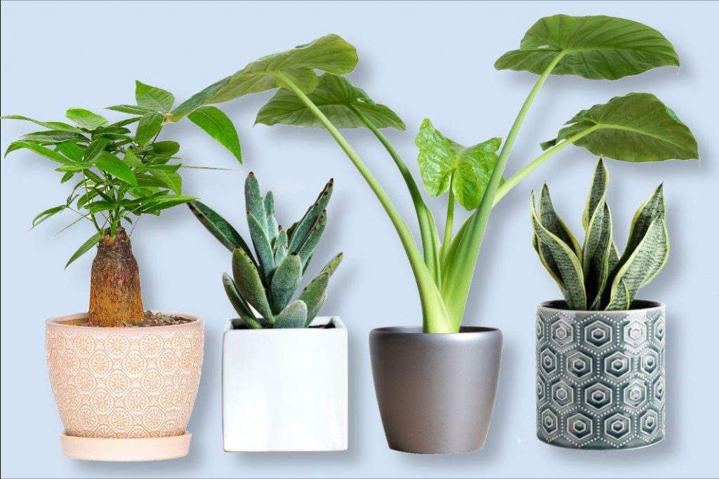 best indoor plant pot