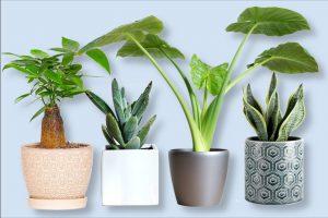 best indoor plant pot