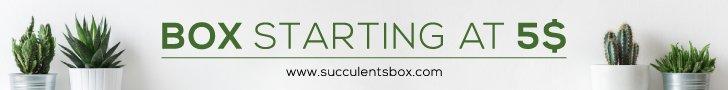Succulent Box Banner 728 x 90