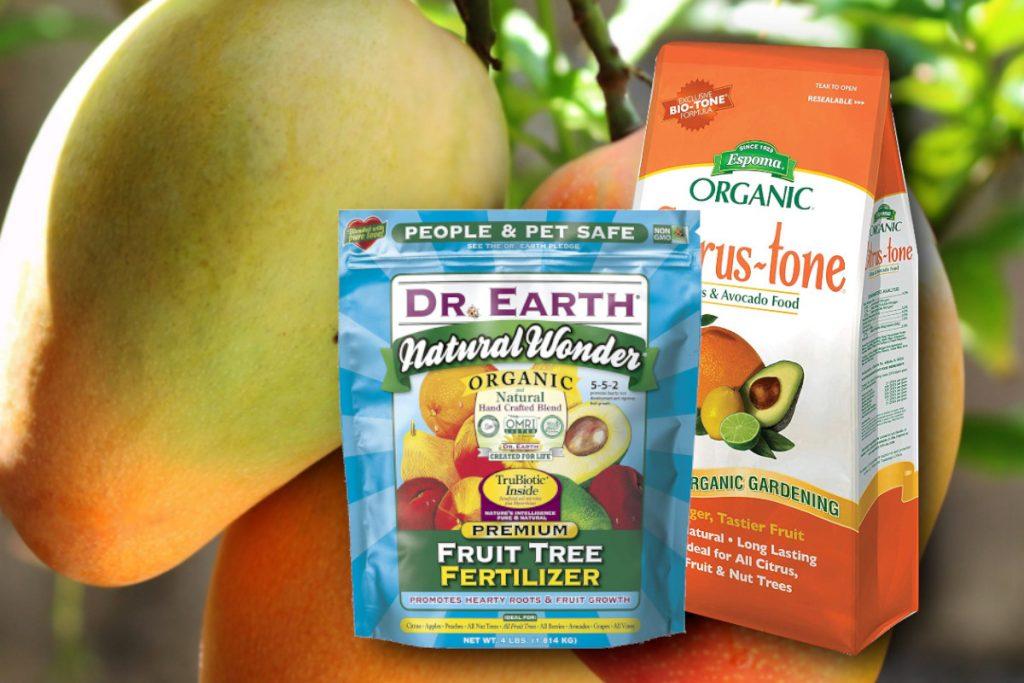 best mango tree fertilizer