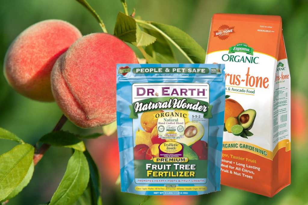 best peach tree fertilizer