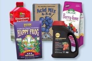 best strawberry fertilizer