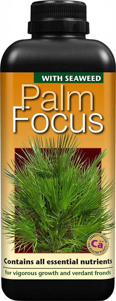 Palm-Focus