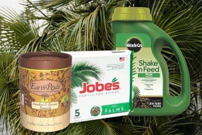 best palm tree fertilizer