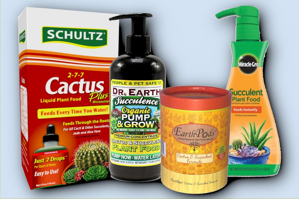 best succulent fertilizer