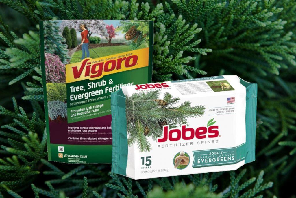 Best Arborvitae Fertilizers