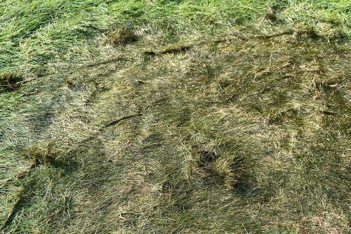 Grass Smells Like Manure Under Paddling Pool