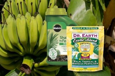 best Fertilizers For banana plants